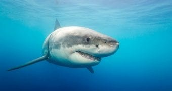 Concert for … sharks